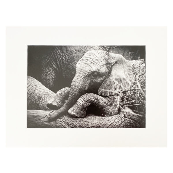 Fine Art Print BW Baby Elephant 30x40