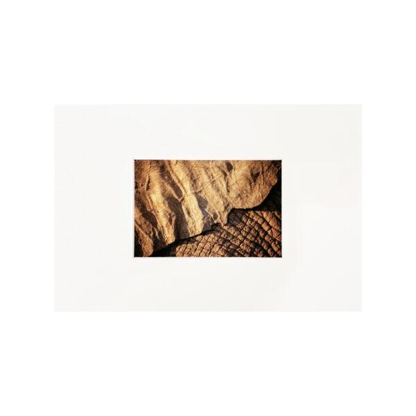 Fine Art Print Ear and Skin 20x30